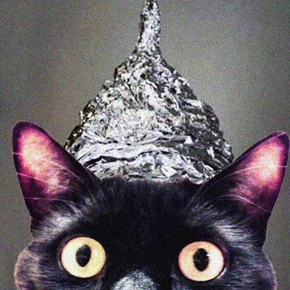 Tin foil hat cat